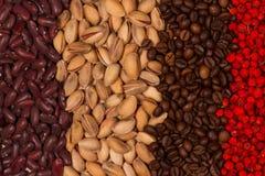 Röda bönor, pistascher, grillade kaffebönor och torkade rönnbär Royaltyfria Foton