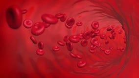 Röda blodceller kretsar att flöda inom skytteln 4K stock video