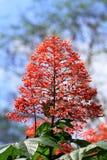 Röda blommabuskar Royaltyfria Foton