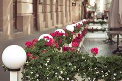 röda blommakrukar Arkivfoton