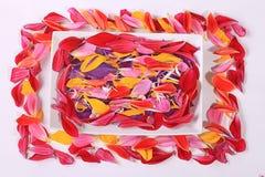 röda blommapetals Arkivbilder