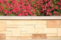 Röda blommor över tegelsten Royaltyfri Fotografi