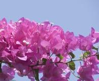 Röda blommor royaltyfria foton