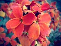 Röda blommor Royaltyfri Bild