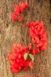R?da blommor av flammor royaltyfria foton