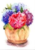 Röda blommor för härlig vanlig hortensia Arkivbilder