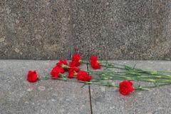 Röda blommor för kryddnejlika arkivfoto