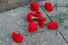 Röda blommor för kryddnejlika royaltyfri fotografi