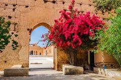 Röda blommor i Badi Palace Marrakech, Marocko fotografering för bildbyråer