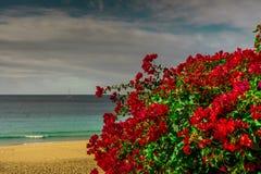 Röda blommor i bakgrunden en strand Arkivbilder