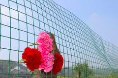 Röda blommor i en fenchvägg Fotografering för Bildbyråer