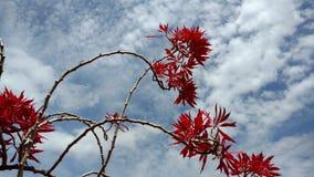 Röda blommor i himlen Fotografering för Bildbyråer