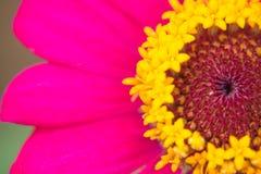 Röda blommor i korta sikten Royaltyfri Fotografi
