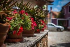 Röda blommor i krukor på den grekiska gatan Arkivbild