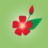 Röda blommor i ljusa färger Arkivfoton
