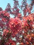 Röda blommor i trädfilialer Royaltyfri Fotografi