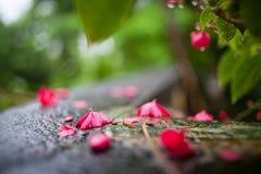 Röda blommor med droppar av dagg i vattnet Royaltyfria Bilder