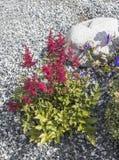 Röda blommor med lövverk Arkivbild