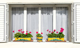 Röda blommor på de vita fönsterbrädorna Arkivfoto