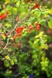 Röda blommor på en filial arkivfoton