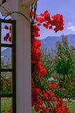Röda blommor på en sockel Arkivfoto