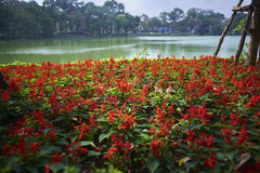 Röda blommor på Hoan Kiem sjön Arkivbild
