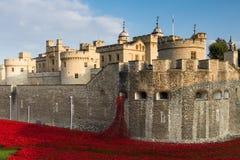 Röda blommor på tornet av London Royaltyfri Foto