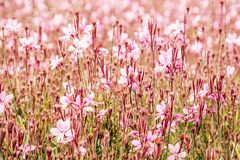 Röda blommor, retro fotofilter Royaltyfria Bilder