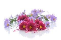 röda bukettchrysanthemums Royaltyfri Foto