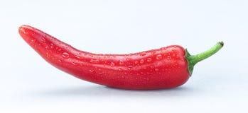 Röda Chili Paprica med vattendroppander som isoleras på en vita Backgroun Arkivfoton