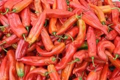 röda chilies Royaltyfri Bild