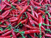 röda chilir Royaltyfri Bild