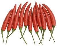 röda chilis Arkivfoton