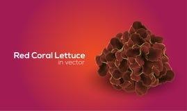 Röda Coral Lettuce i vektorkonst vektor illustrationer