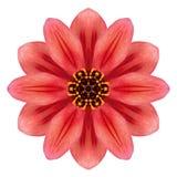 Röda Dahlia Mandala Flower Kaleidoscopic Isolated på vit Royaltyfria Bilder