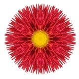 Röda Daisy Mandala Flower Kaleidoscopic Isolated på vit Arkivfoto