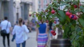 Röda dekorativa blommor dekorerar kafét Landskap och garnering av stadsgator En varm sommardag stock video