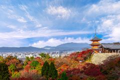 röda den härliga Momiji höst färgrika, gröna och gula lönnen Arkivbilder