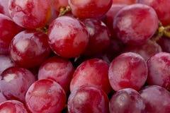 röda druvor Arkivfoto