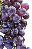 röda druvor Royaltyfria Bilder