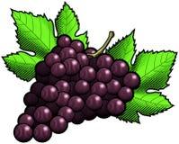 röda druvor Royaltyfri Foto