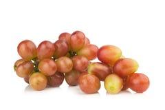 röda druvor Moget nytt white för vatten för vektor för bakgrundsdroppe illustration isolerad Royaltyfri Bild