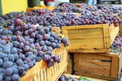 Röda druvor på den lokala marknaden i Valparaiso, Chile. Royaltyfri Fotografi