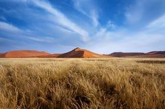 Röda dyn i Sossusvlei Fotografering för Bildbyråer