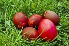 Röda easter ägg i gräs Arkivbilder