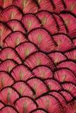 Röda fjädrar Fotografering för Bildbyråer