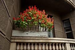 Röda flowerrs Arkivfoto