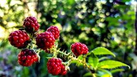 Röda frukter arkivfoton
