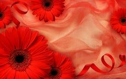 Röda gerberablommor och siden- band på draperat tyg royaltyfri bild