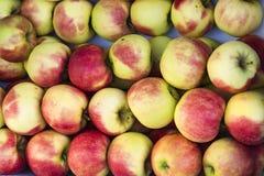 Röda gröna Elstar för hög äpplen arkivbild
